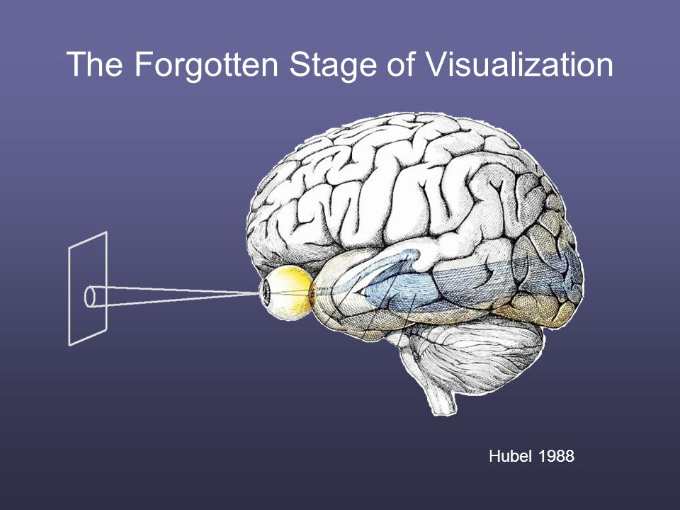 Hubel 1988 The Forgotten Stage of Visualization