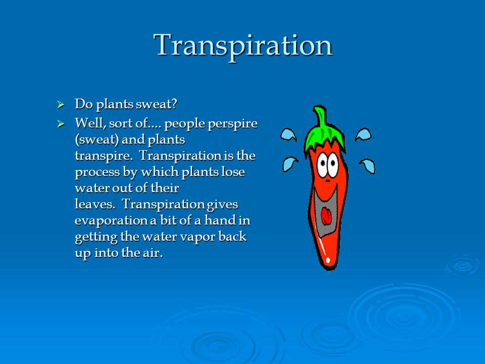 Transpiration Do plants sweat? Do plants sweat? Well, sort of.... people perspire (sweat) and plants transpire. Transpiration is the process by which