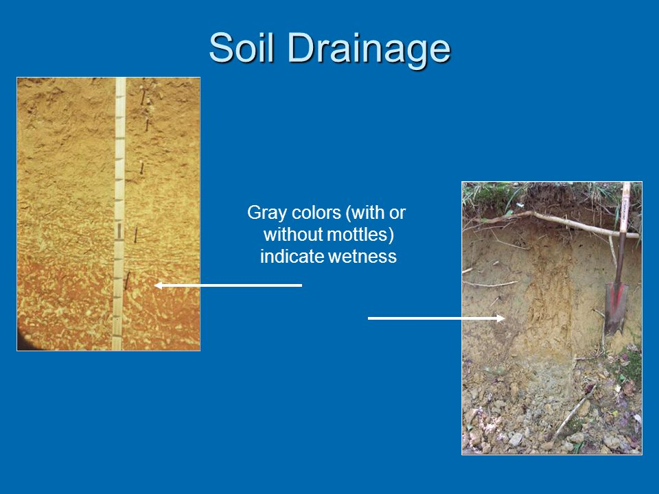 Soil Drainage Gray colors (with or without mottles) indicate wetness