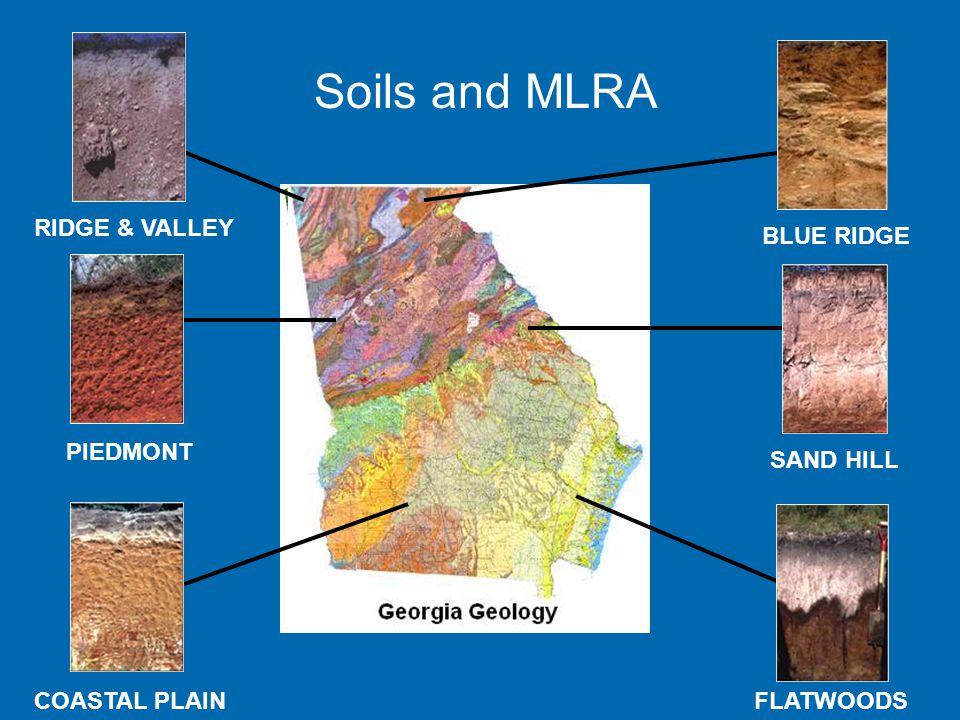 PIEDMONT FLATWOODS BLUE RIDGE RIDGE & VALLEY SAND HILL COASTAL PLAIN Soils and MLRA