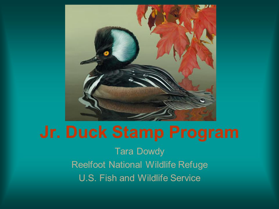 Jr. Duck Stamp Program Tara Dowdy Reelfoot National Wildlife Refuge U.S. Fish and Wildlife Service