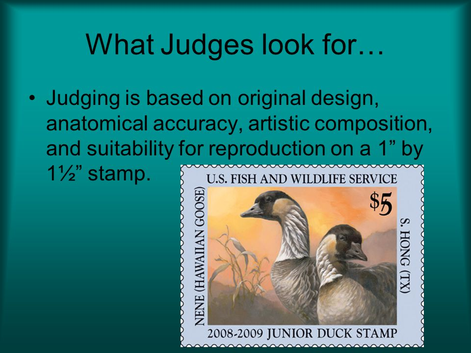What Judges look for… Judging is based on original design, anatomical accuracy, artistic composition, and suitability for reproduction on a 1 by 1½ stamp.