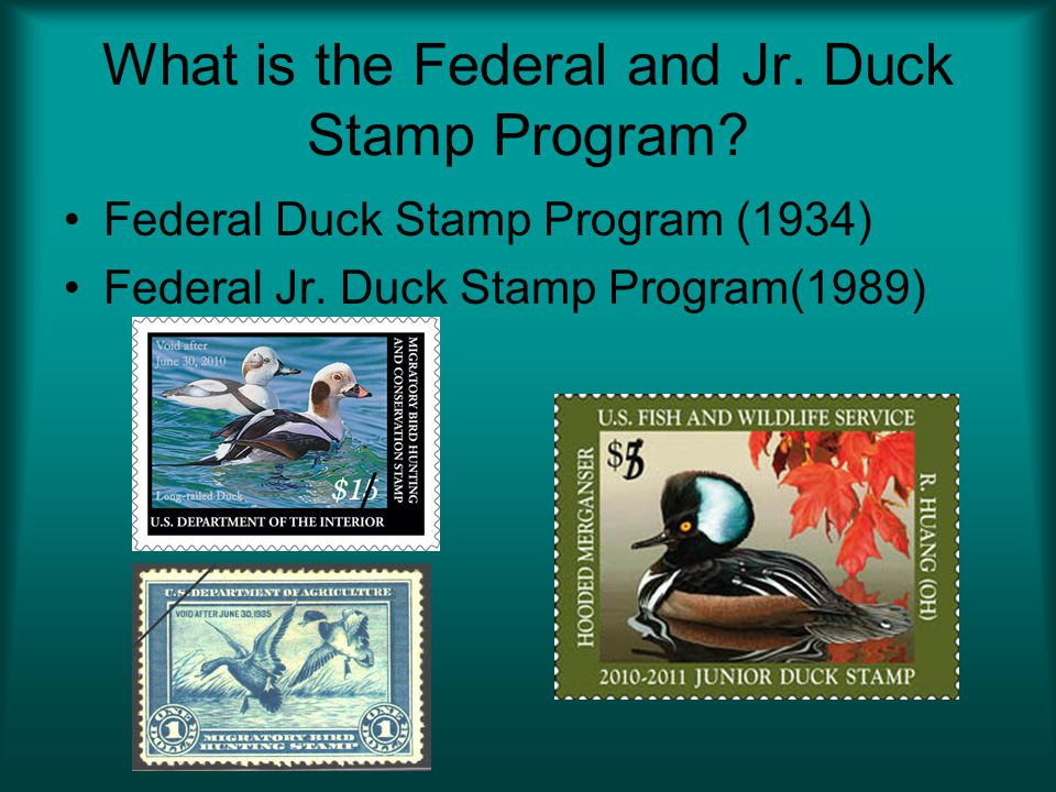What is the Federal and Jr.Duck Stamp Program. Federal Duck Stamp Program (1934) Federal Jr.
