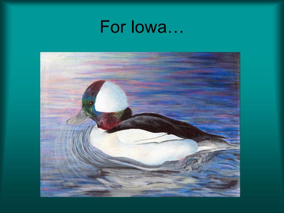 For Iowa…