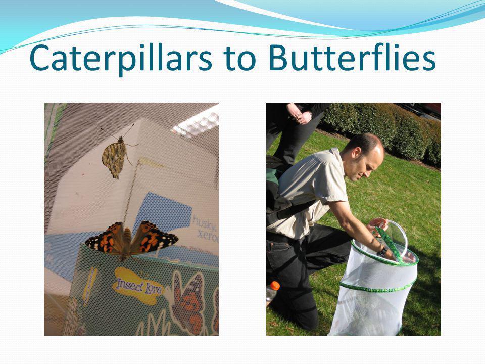 Caterpillars to Butterflies