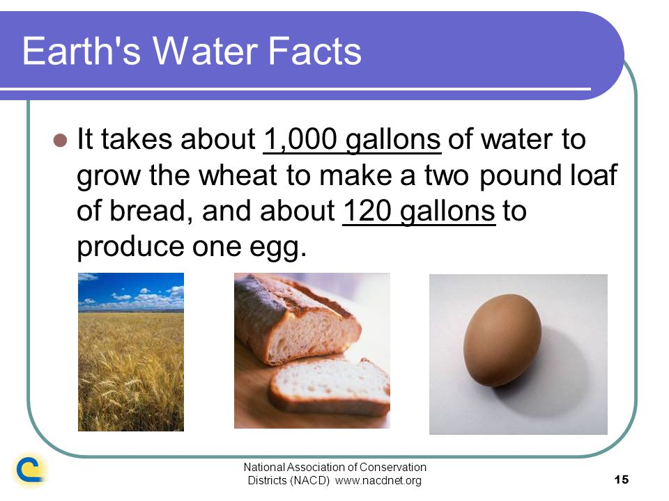 National Association of Conservation Districts (NACD) www.nacdnet.org15 Earth's Water Facts It takes about 1,000 gallons of water to grow the wheat to