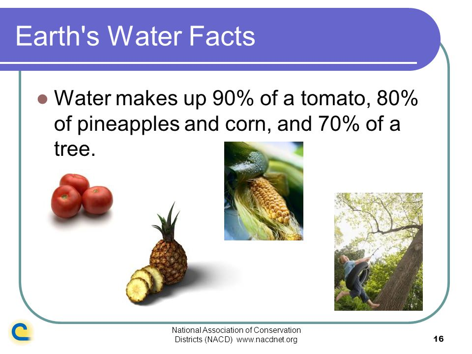 National Association of Conservation Districts (NACD) www.nacdnet.org16 Earth's Water Facts Water makes up 90% of a tomato, 80% of pineapples and corn