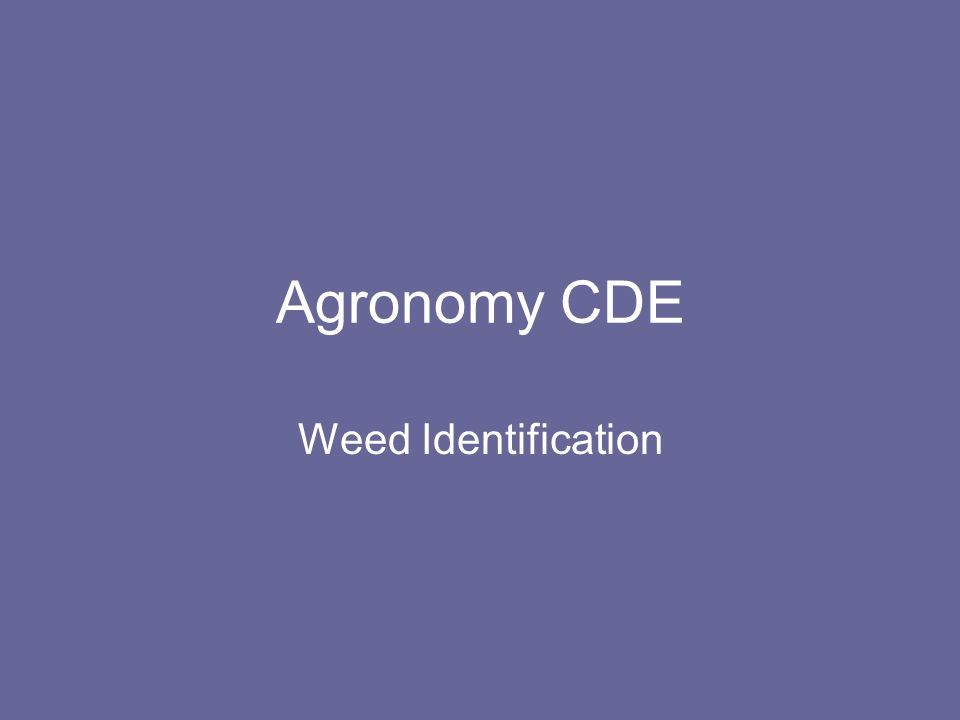 Agronomy CDE Weed Identification
