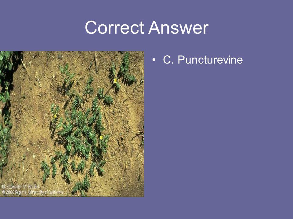 Correct Answer C. Puncturevine