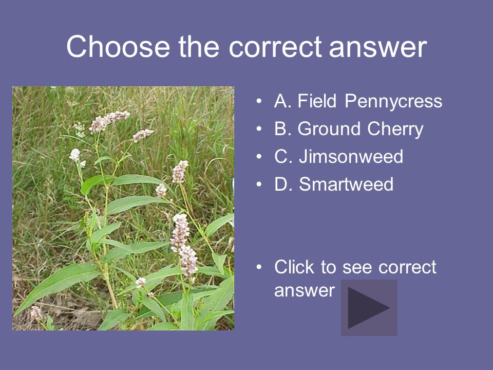 Choose the correct answer A. Field Pennycress B. Ground Cherry C. Jimsonweed D. Smartweed Click to see correct answer