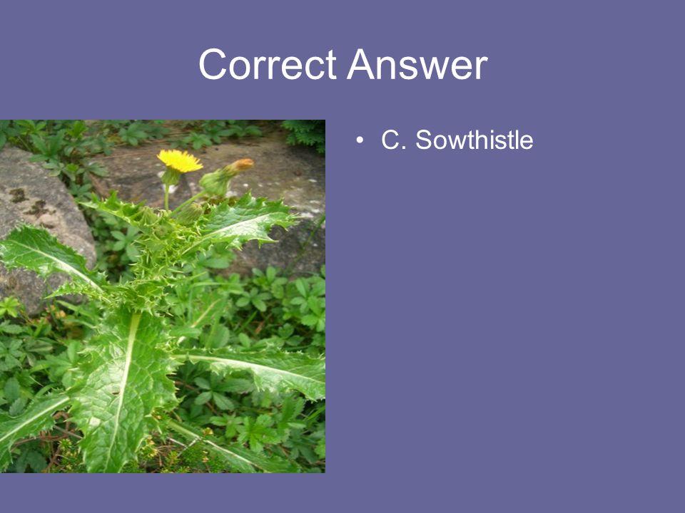 Correct Answer C. Sowthistle