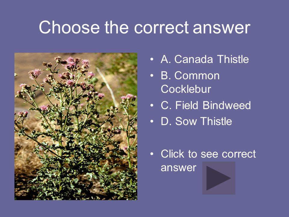 Correct Answer A. Field Pennycress