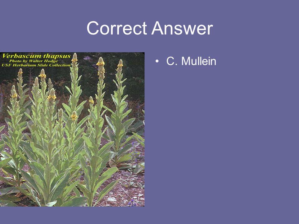 Correct Answer C. Mullein
