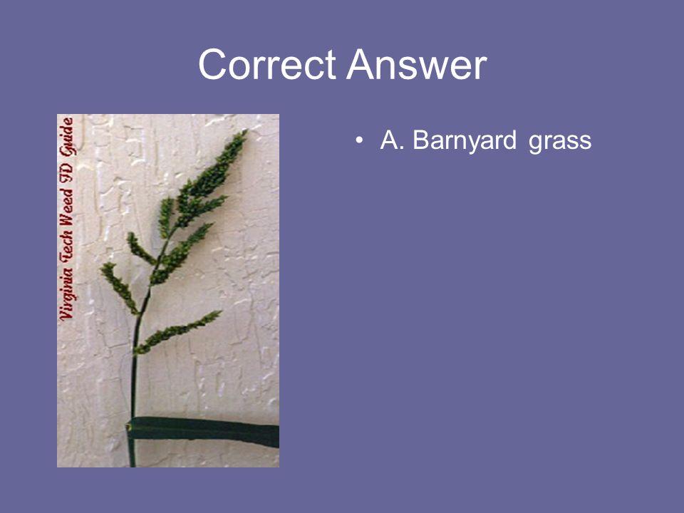 Correct Answer A. Barnyard grass