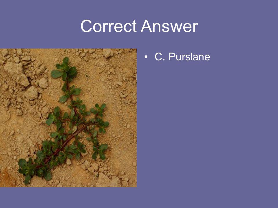 Correct Answer C. Purslane