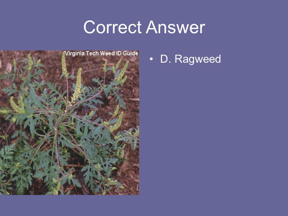 Correct Answer D. Ragweed