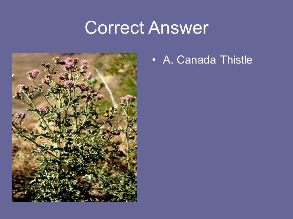 Correct Answer A. Canada Thistle