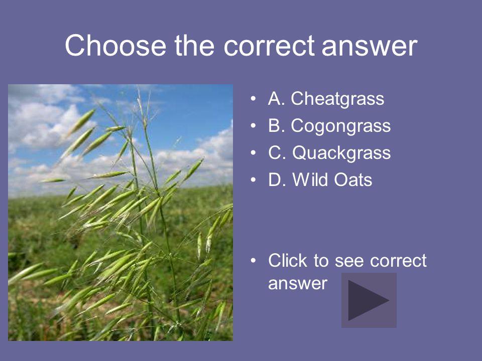 Choose the correct answer A. Cheatgrass B. Cogongrass C. Quackgrass D. Wild Oats Click to see correct answer