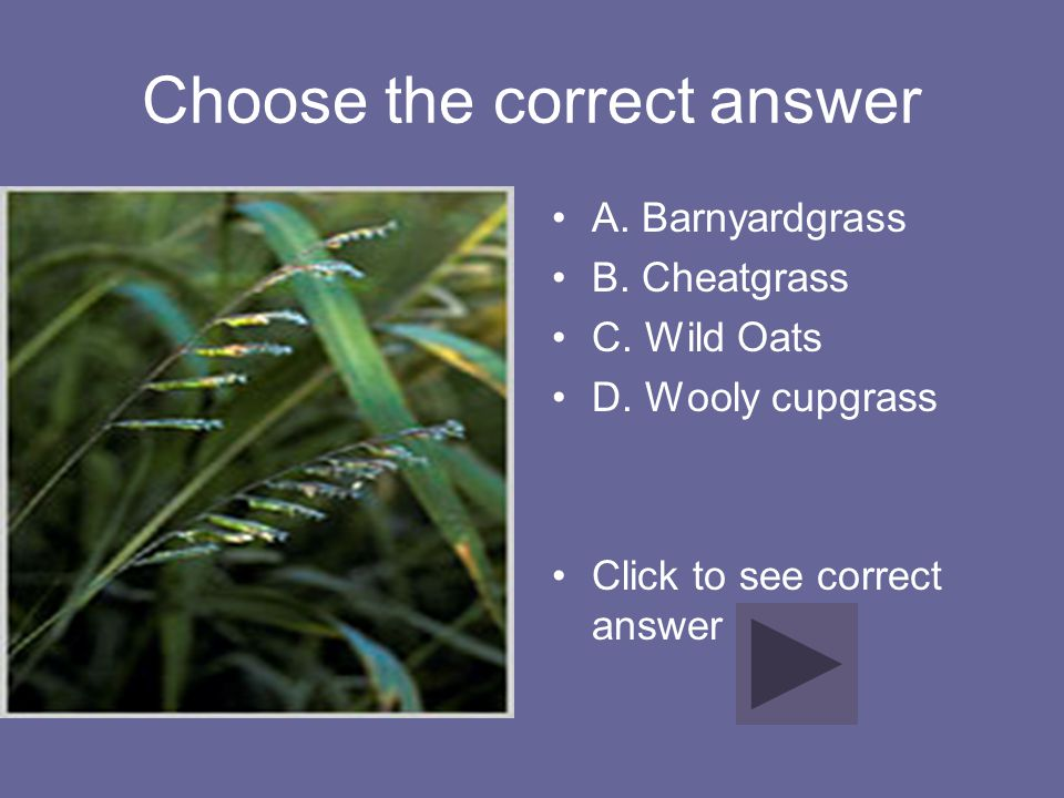 Choose the correct answer A. Barnyardgrass B. Cheatgrass C. Wild Oats D. Wooly cupgrass Click to see correct answer