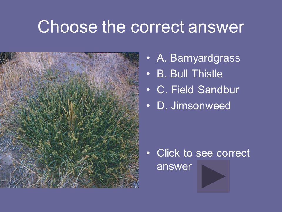 Choose the correct answer A. Barnyardgrass B. Bull Thistle C. Field Sandbur D. Jimsonweed Click to see correct answer