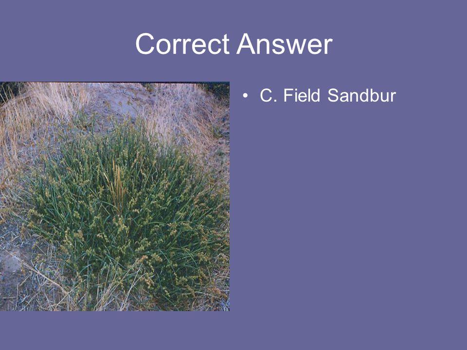 Correct Answer C. Field Sandbur
