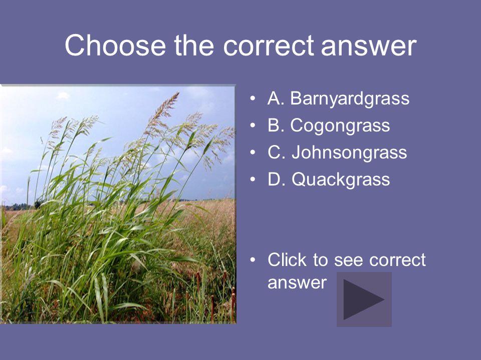 Choose the correct answer A. Barnyardgrass B. Cogongrass C. Johnsongrass D. Quackgrass Click to see correct answer