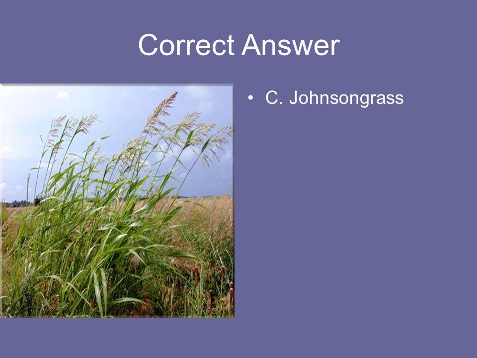 Correct Answer C. Johnsongrass