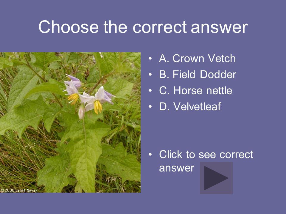 Choose the correct answer A. Crown Vetch B. Field Dodder C. Horse nettle D. Velvetleaf Click to see correct answer