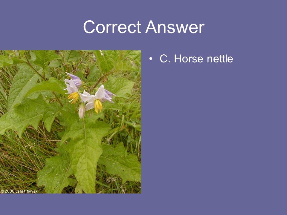 Correct Answer C. Horse nettle