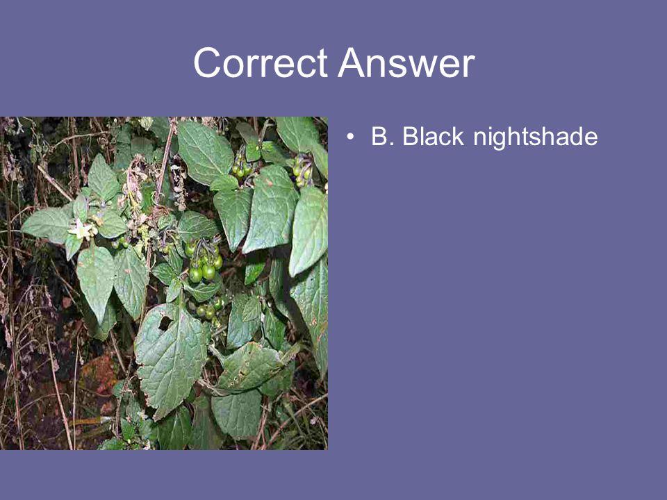Correct Answer B. Black nightshade