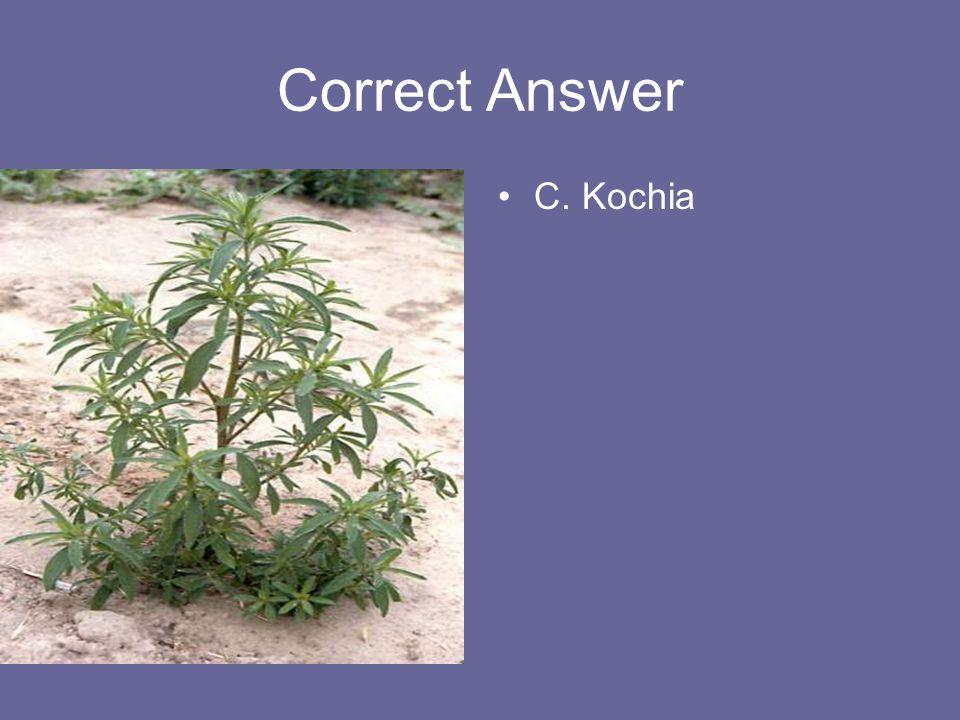 Correct Answer C. Kochia