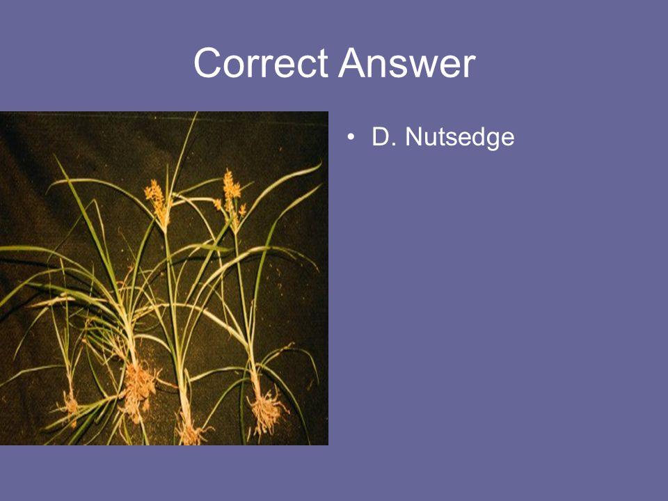 Correct Answer D. Nutsedge