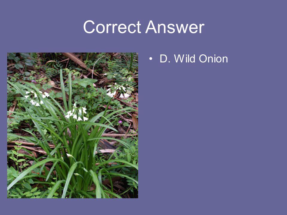 Correct Answer D. Wild Onion