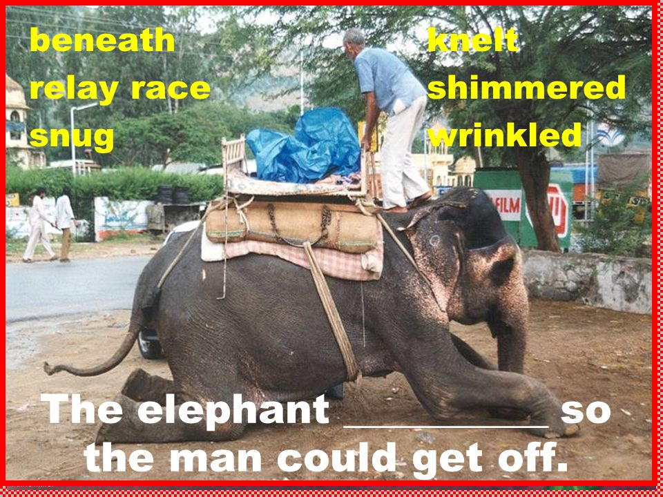 Anne Miller beneath relay race snug The elephant __________ so the man could get off. knelt shimmered wrinkled