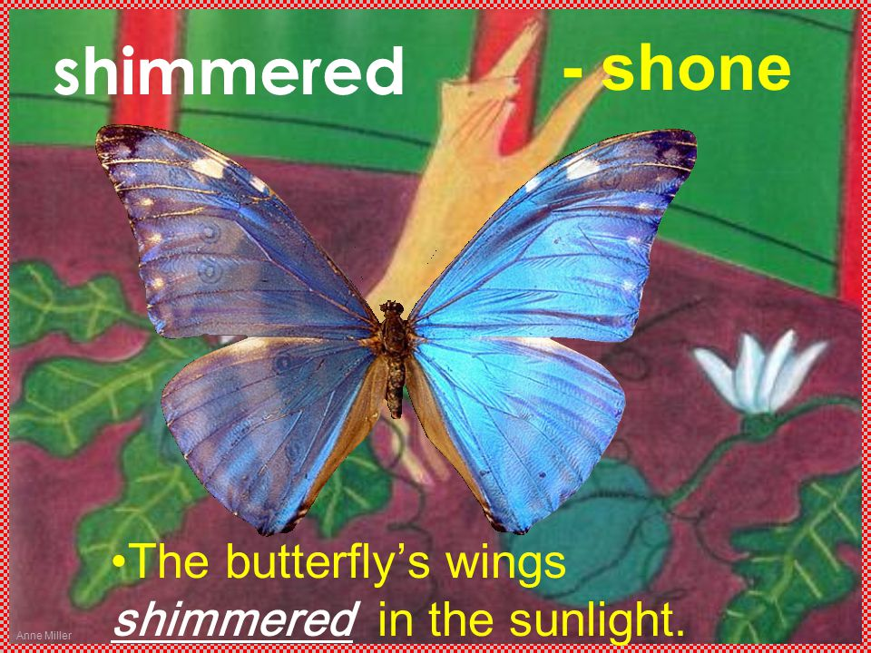 Anne Miller shimmered - shone The butterflys wings shimmered in the sunlight.