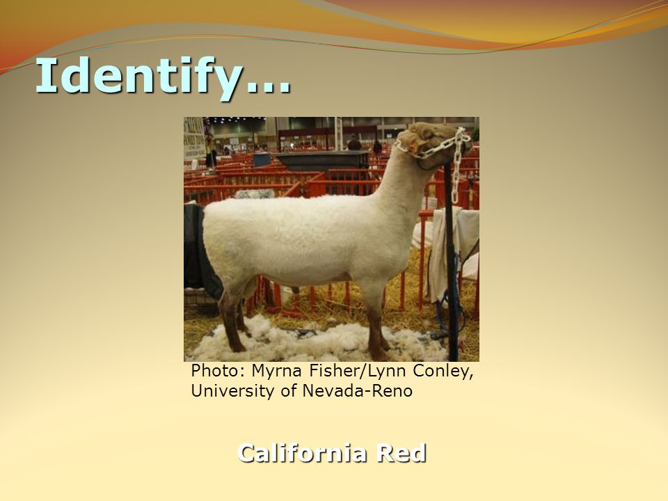 Identify… California Red Photo: Myrna Fisher/Lynn Conley, University of Nevada-Reno