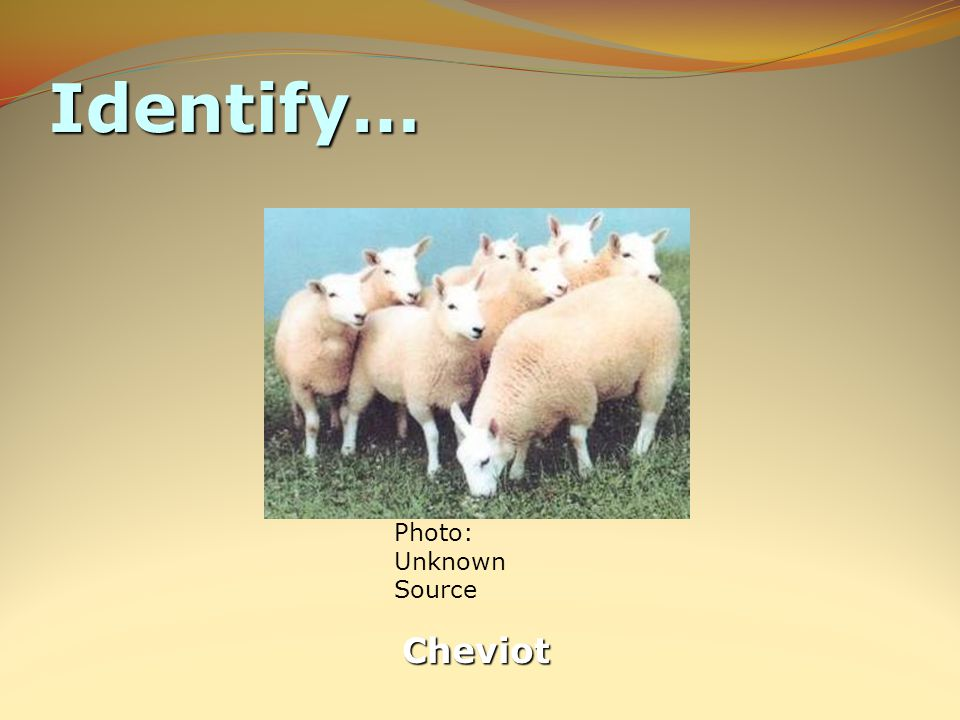 Identify… Cheviot Photo: Unknown Source
