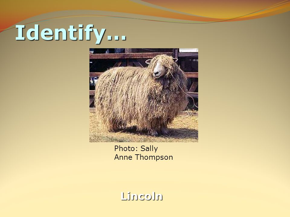 Identify… Lincoln Photo: Sally Anne Thompson