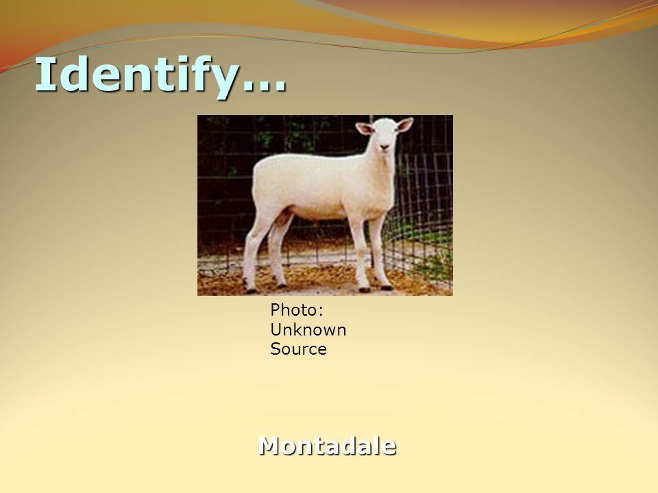 Identify… Montadale