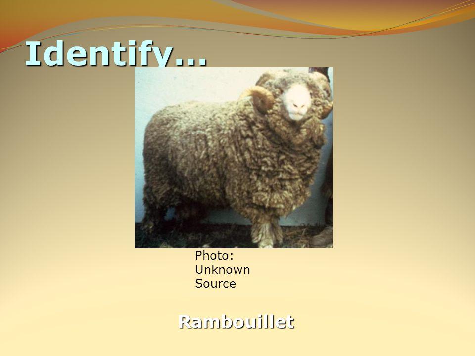 Identify… Rambouillet
