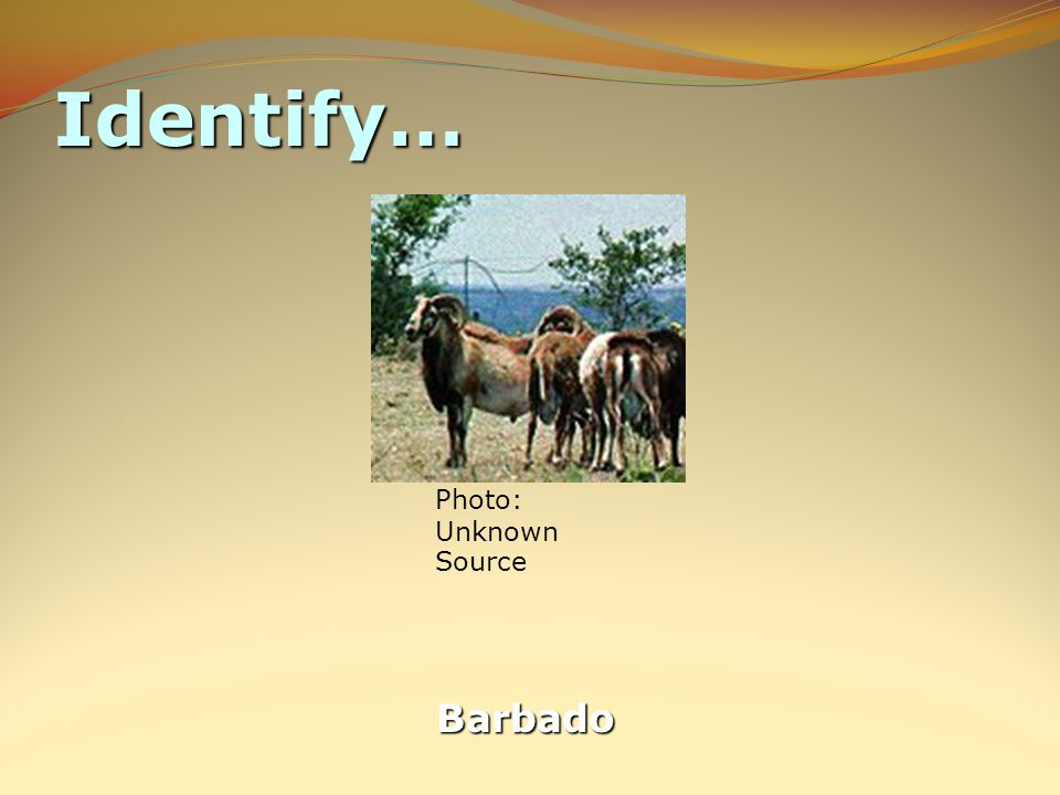 Identify… Barbado Photo: Unknown Source