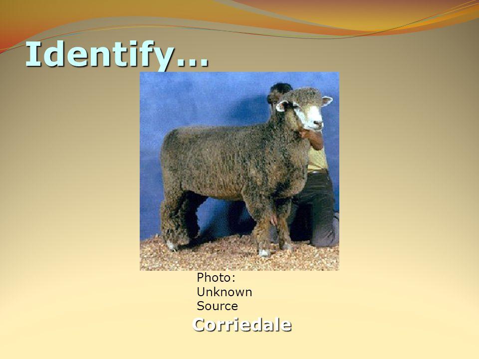 Identify… Corriedale