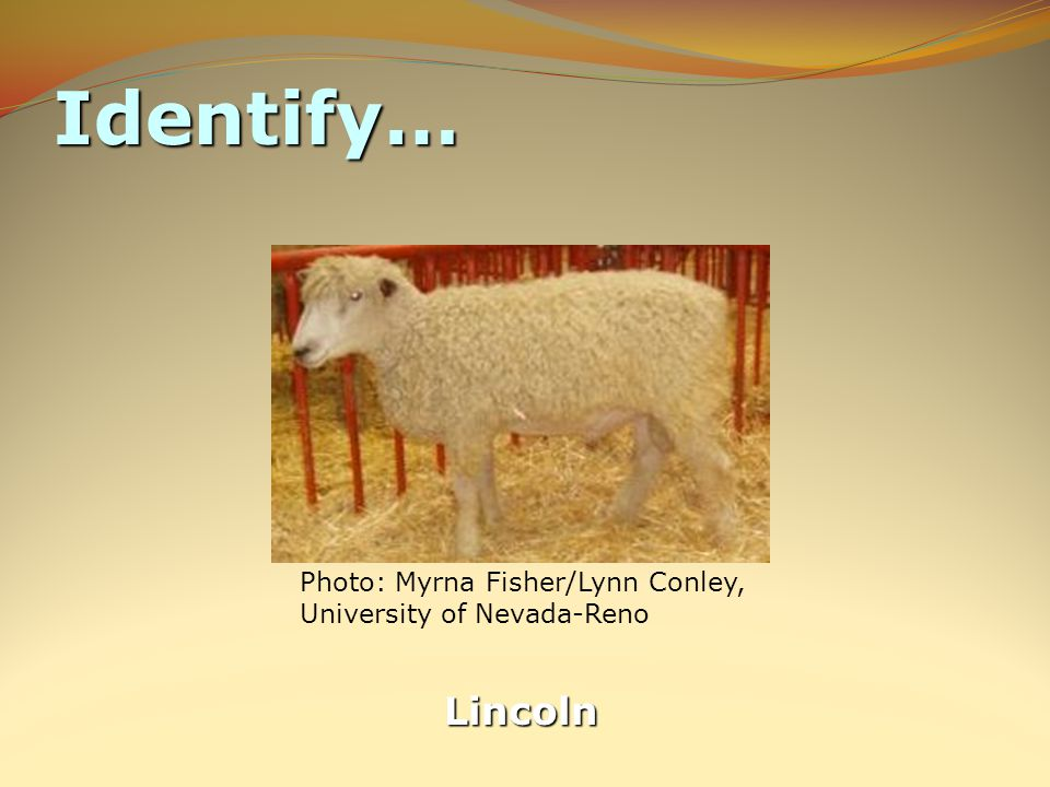 Identify… Lincoln Photo: Myrna Fisher/Lynn Conley, University of Nevada-Reno