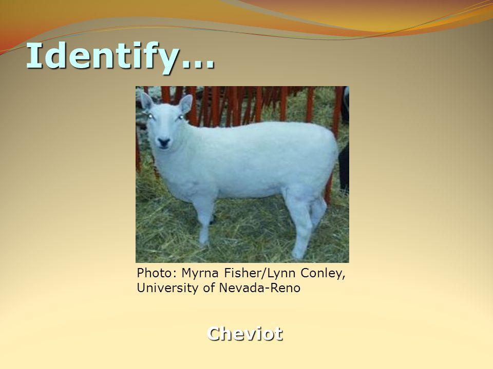 Identify… Cheviot
