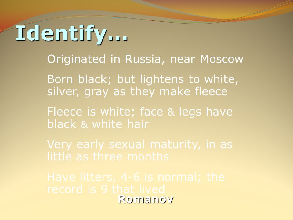 Identify… Romanov Originated in Russia, near Moscow Born black; but lightens to white, silver, gray as they make fleece Fleece is white; face & legs have black & white hair Very early sexual maturity, in as little as three months Have litters, 4-6 is normal; the record is 9 that lived