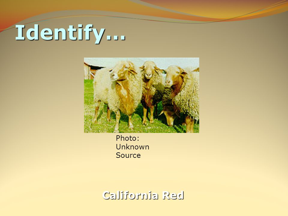 Identify… California Red Photo: Unknown Source