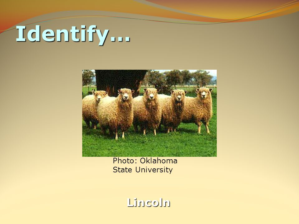 Identify… Lincoln Photo: Oklahoma State University