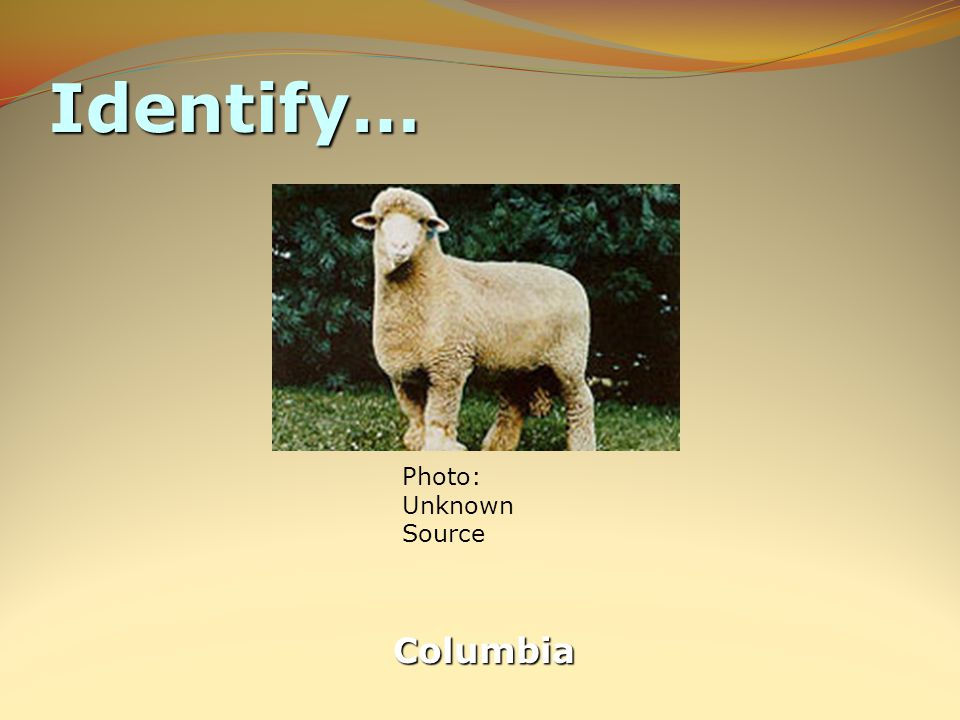Identify… Columbia Photo: Unknown Source
