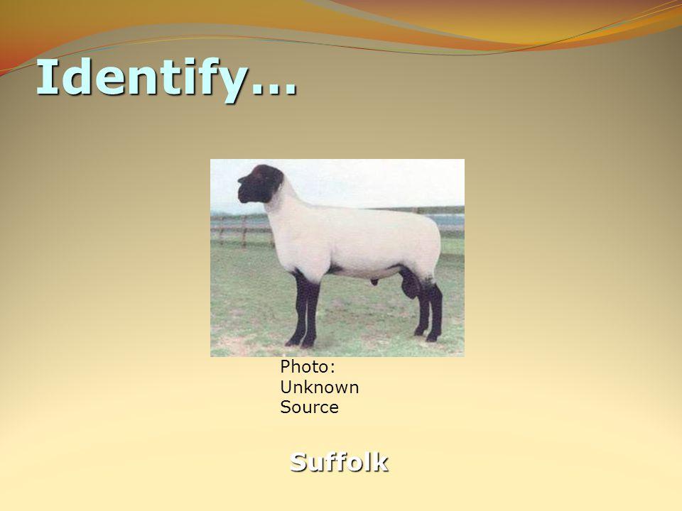 Identify… Suffolk