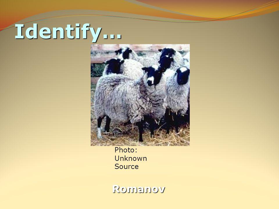 Identify… Romanov